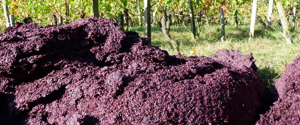 Wine Health Benefits 101: Procyanidins