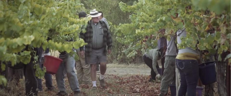 An Inspiring California Winemaker & Pioneer