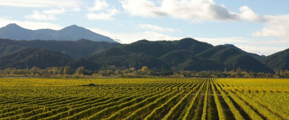Why New Zealand Has So Much More to Offer than Sauvignon Blanc
