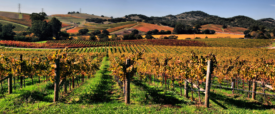 Win a $5,000 Luxury Vacation in Napa!