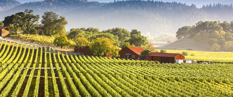 Win the Ultimate Wine Weekend in Napa!