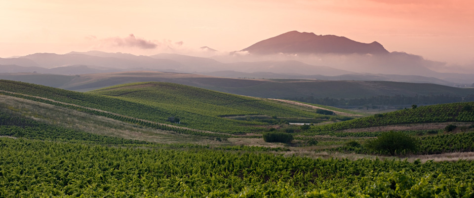 Ever Heard Of…Yecla? & More Awesome Wine Regions