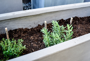 Pairing Wine & Herbs: How to Plant a Potager Garden