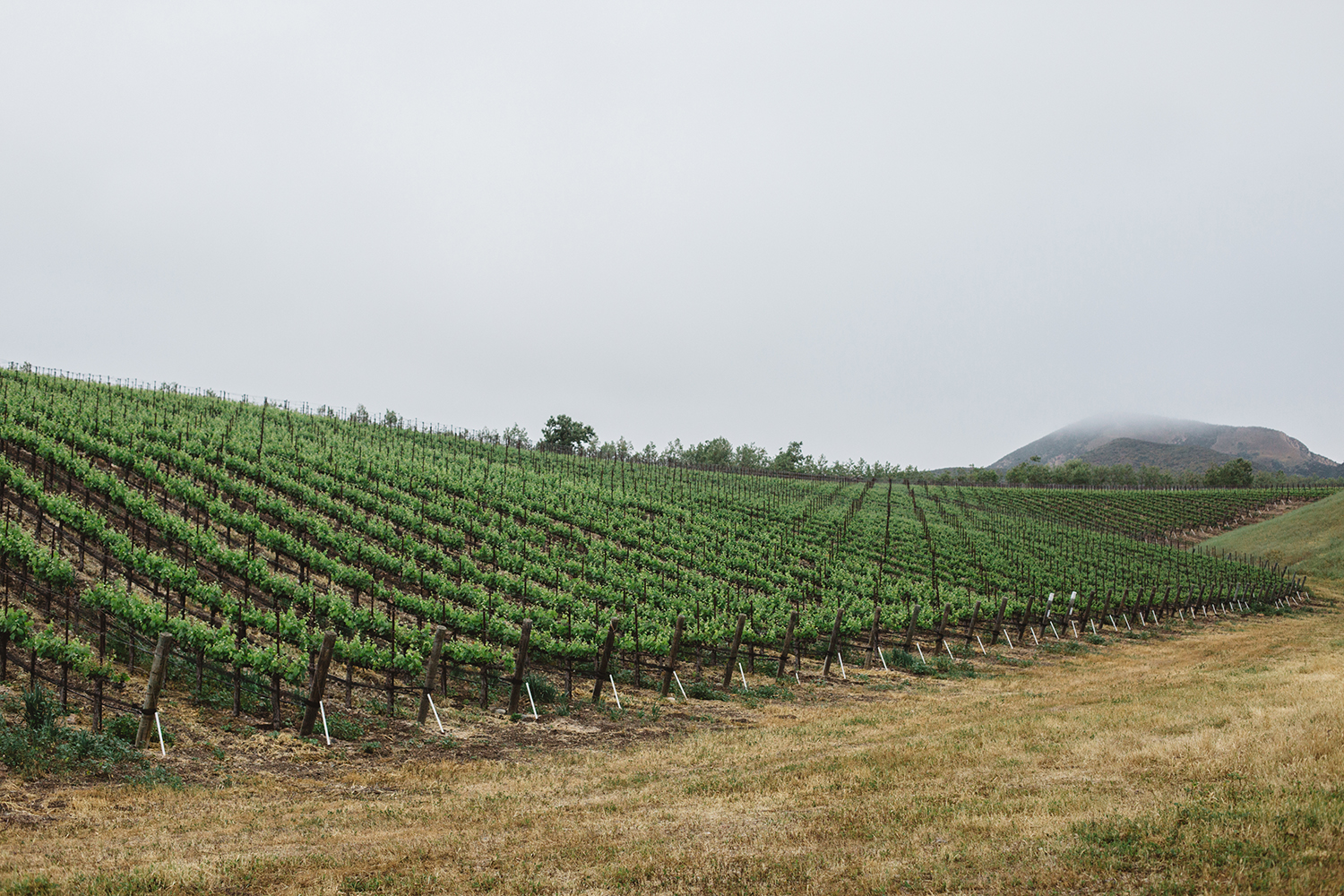 Winc's Winemaking Heart Lies in Santa Barbara County