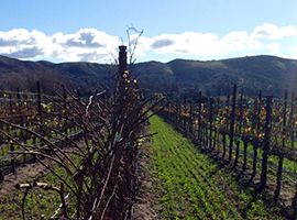The Ultimate Guide to Organic, Biodynamic, and Sustainable Wines