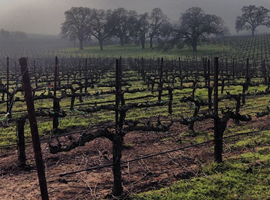 4 Things to Check Out During California Wine Month