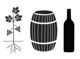 Infographic: How Wine Is Made