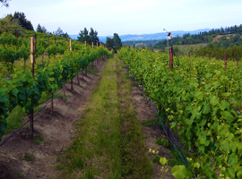 Do You Have What It Takes to Own a Vineyard?