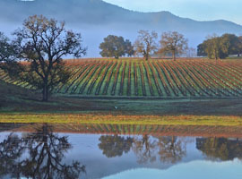 Rising Star: All Eyes on Paso Robles