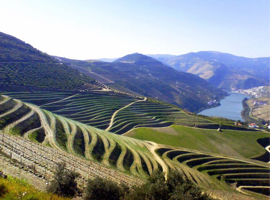 Get Pumped About Portugal, the Hottest New Winemaking Region!