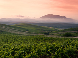 5 Up & Coming Wine Regions You Need To Know About...