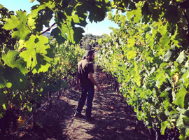 How Does a Winemaker Know When it's Time to Pick?