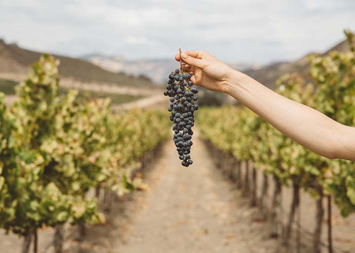 Q&A: Women in Winemaking at Winc